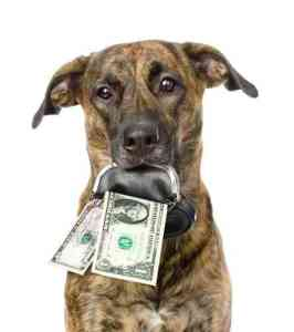 Large dog holding money