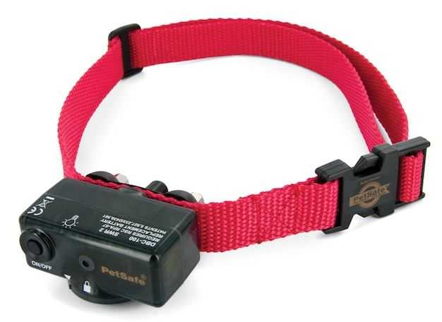 Electronic Dog Collars Are They Safe Dig Your Dog
