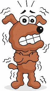 dog getting shocked