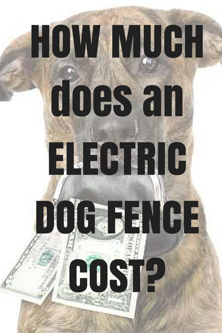 How much does an electric dog fence cost?