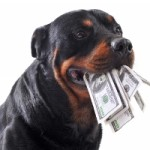 rottweiller with money in mouth