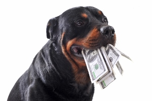How Much Does An Electric Dog Fence Cost Dig Your Dog