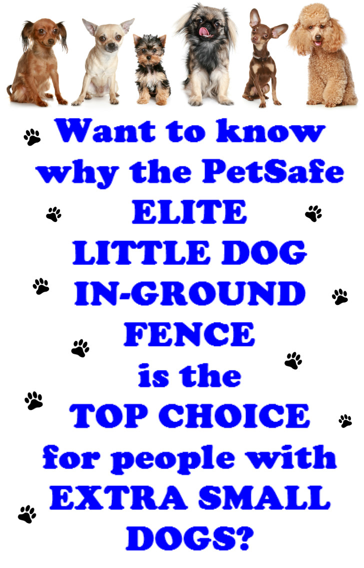 elite little dog pinterest image