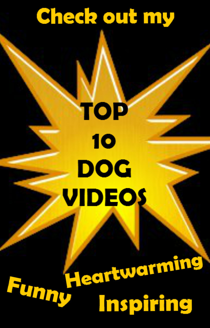 Top 10 dog videos Pinterest image