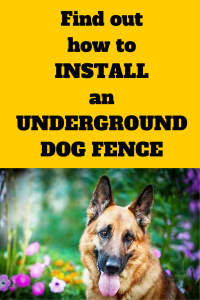 How to install an underground dog fence