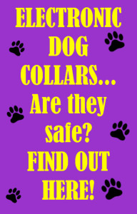 Are Electronic Dog Collars Safe?
