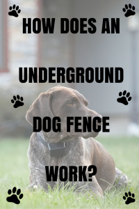 How Does An Underground Dog Fence Work Dig Your Dog