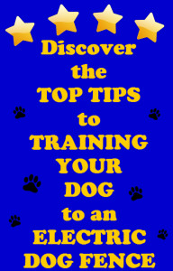 Top tips for training your dog to an electric dog fence